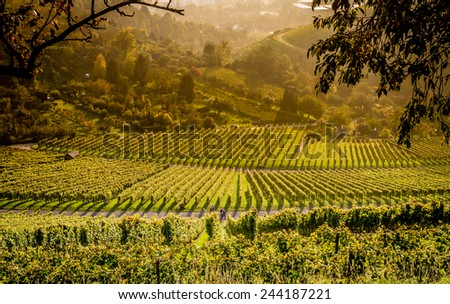 View down the idyllic vineyards and fruit orchards of Stuttgart-Rotenberg (Germany) - stock photo