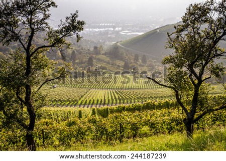 View down the idyllic vineyards and fruit orchards of Stuttgart-Rotenberg (Germany) with the Neckar river in the distance - stock photo