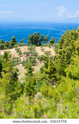 View from above by Olive trees and Aegean Sea. Greece, Halkidiki, Kassandra.
