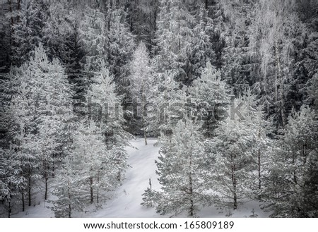 view from above on winter forest under snow - stock photo