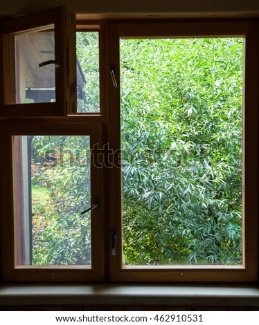 view from country cottage window on green willow tree on backyard in summer day