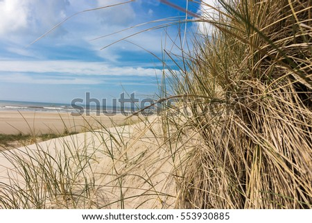 view from dunes to the beach on a sunny day, through dune grass in northern holland. the beach and the ocean in the background.