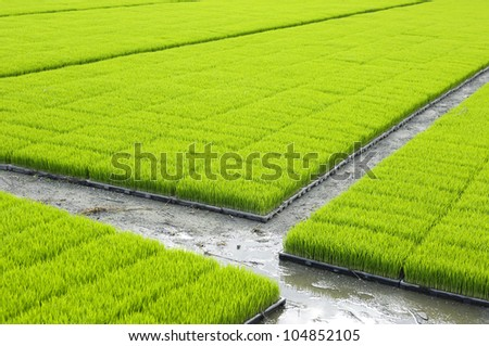 View from hot air balloon of green rice field, - stock photo