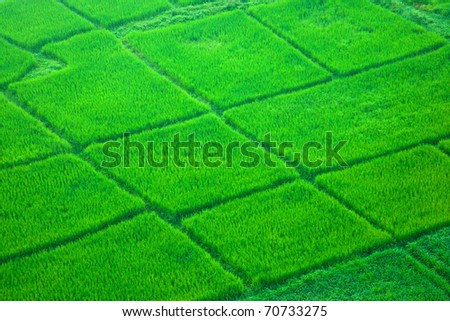 View from hot air balloon of green rice field, Chiang Mai, Thailand - stock photo