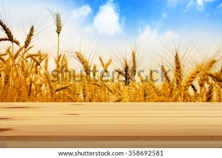 View from table on wheat field. - stock photo