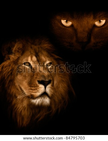 View from the darkness. Lion on a black background. - stock photo