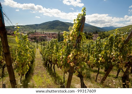 View from the famous wine route in the Alsace region in France - stock photo