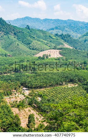 View from the hill with oil palm plantation in Phang Nga, Thailand