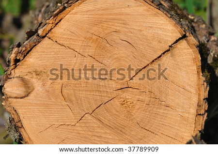 View from top at the cross section of tree showing rings and cracks - stock photo