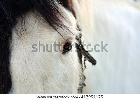 View horses - stock photo