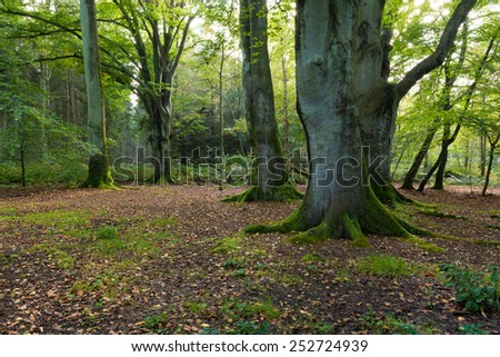 view into a forest at Darss Peninsula in Germany