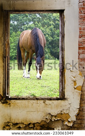 view of a beautiful brown horse through a grungy dilapidated old farmhouse window - stock photo