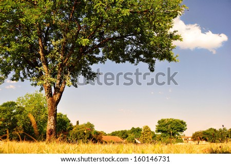 View of a Big Tree Against Blue Sky