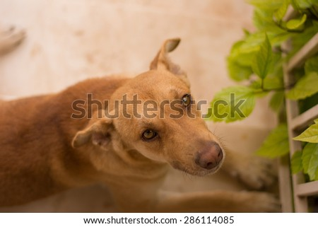 View of a brown dog lying on the yards steps - stock photo