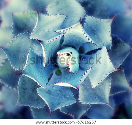 view of a cactus - stock photo