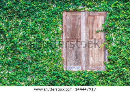 View of a closed wood window and of a wall covered with ivy - stock photo