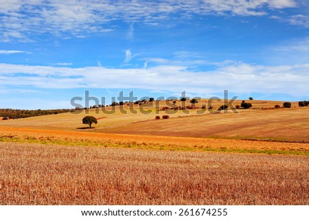 view of a cornfield landscape in the province of Soria, in Spain - stock photo