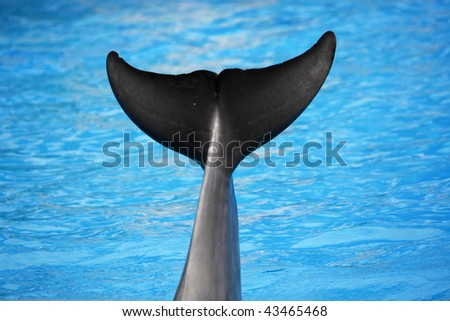 View of a dolphin's tail out of the water. - stock photo