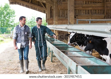 View of a Farmer and veterinary working together in a barn - stock photo