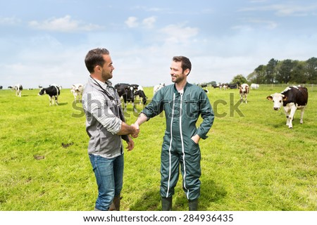 View of a Farmer and veterinary working together in a masture with cows - stock photo