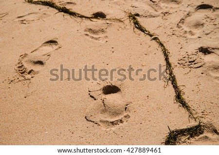 view of a footprints in the sand at the seaside