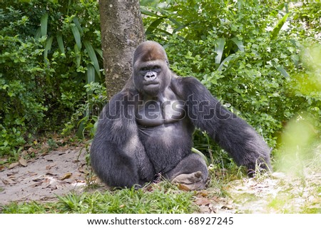 View of a gorilla sitting in the wild. - stock photo