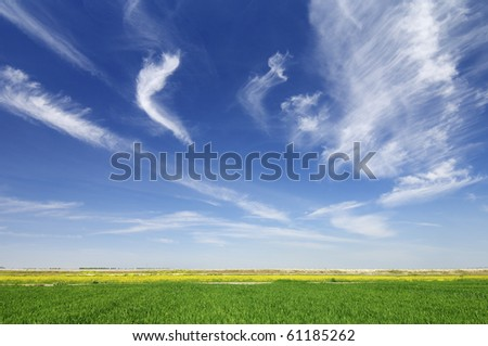 view of a green meadow with a spectacular sky white clouds - stock photo