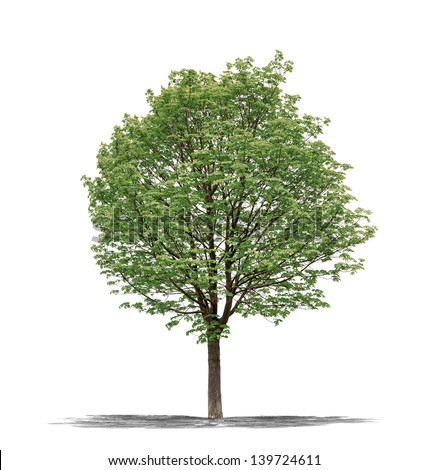 View of a Green tree on a white background - stock photo