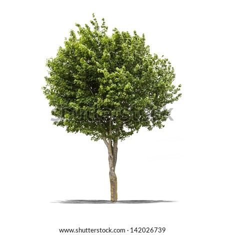View of a high resolution green tree isolated on a white background - stock photo