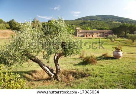 View of a luxury country house in the famous tuscan hills, Italy. In foreground an olive tree.
