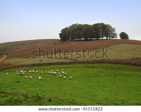 View of a meadow with sheeps - stock photo