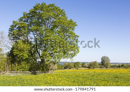 View of a meadow with trees in spring