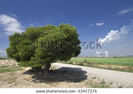 view of a pine tree and a power plant pollutant