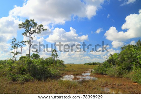 "View of a ""slough"" in the Florida Everglades. A slough is a slow moving body of water in a bed of saw grass - stock photo"