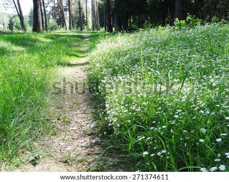 view of a spring forest on a sunny day with field of flowers - stock photo