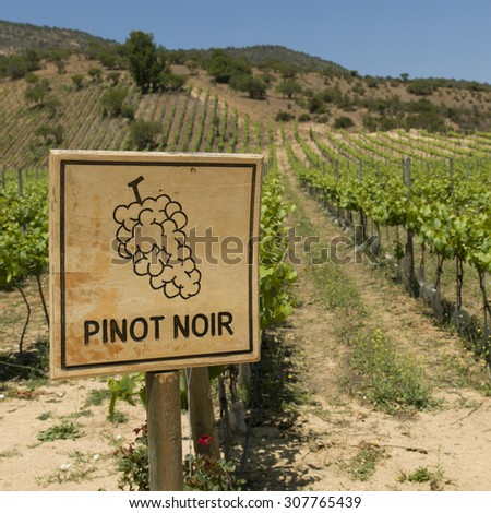 View of a vineyard in Casablanca Valley, Chile - stock photo
