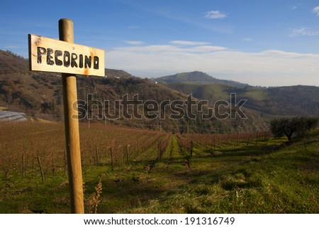 View of a vineyard in Marche with indication of grape's variety Pecorino, Italy - stock photo