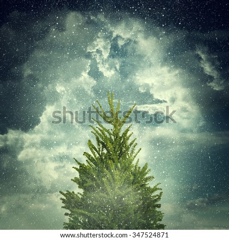 View of a winter day with cloudy sky, snowflakes, green fir and fog. Christmas background with snowy, tall fir. - stock photo