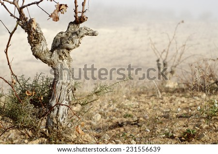 View of a winter vineyard, Munebrega, Zaragoza, Aragon, Spain - stock photo