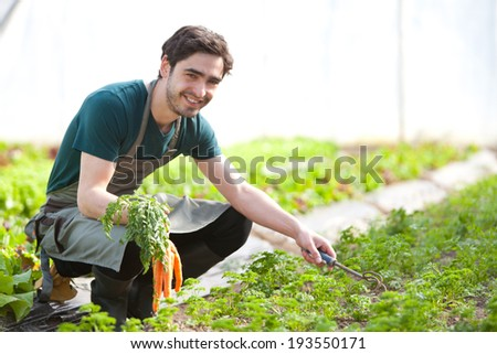 View of a Young attractive farmer harvesting carrots
