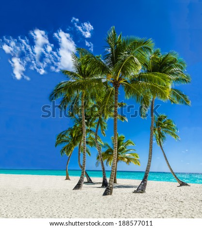 View of an exotic Caribbean beach with tall palm trees and yellow sand, Caribbean Islands.  - stock photo