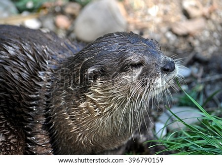 view of animal - otter
