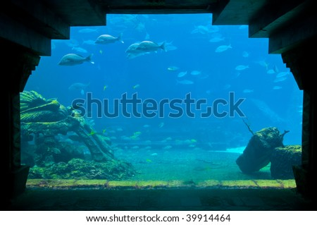 View of Aquarium tank with tropical fishes. - stock photo