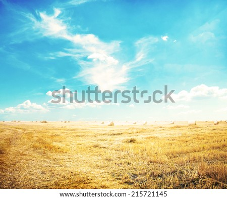 View of autumn field with hays  - stock photo