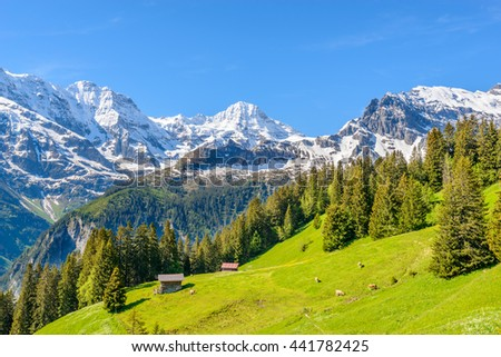 View of beautiful landscape in the Alps with fresh green meadows and snow-capped mountain tops in the background on a sunny day with blue sky and clouds in springtime. - stock photo