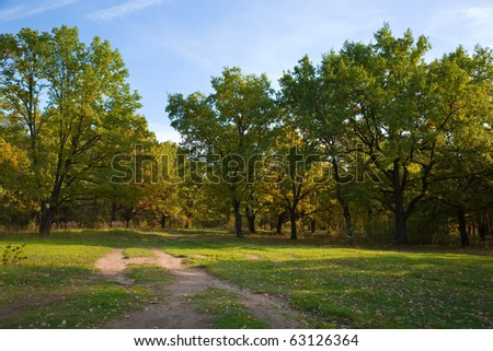 View of beautiful oak forest in autumn - stock photo