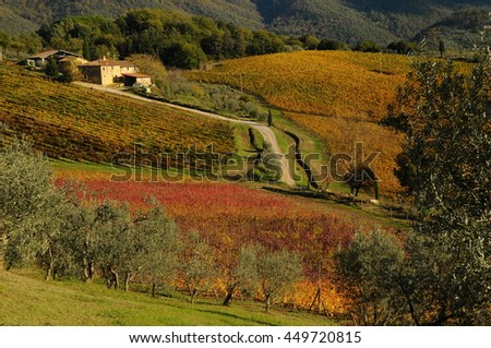 View of beautiful vineyards in Tuscany, Chianti, Italy. Autumn Season.