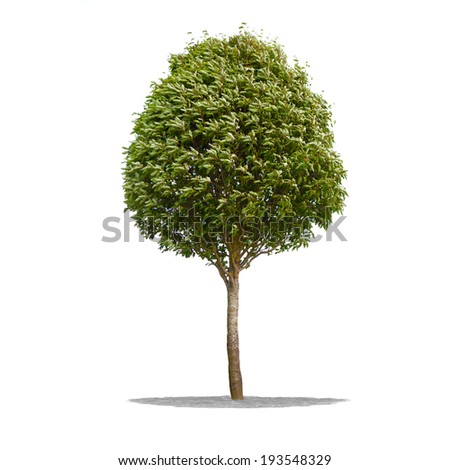 View of Beautifull green tree on a white background in high definition  - stock photo