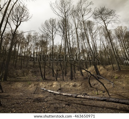 View of bleak forest after fire.