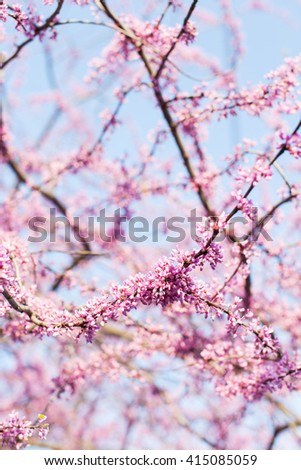 view of blooming tree branches at spring
